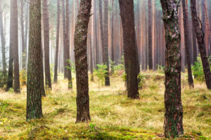 forest-scene